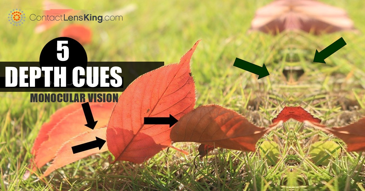 Monocular Vision Cues