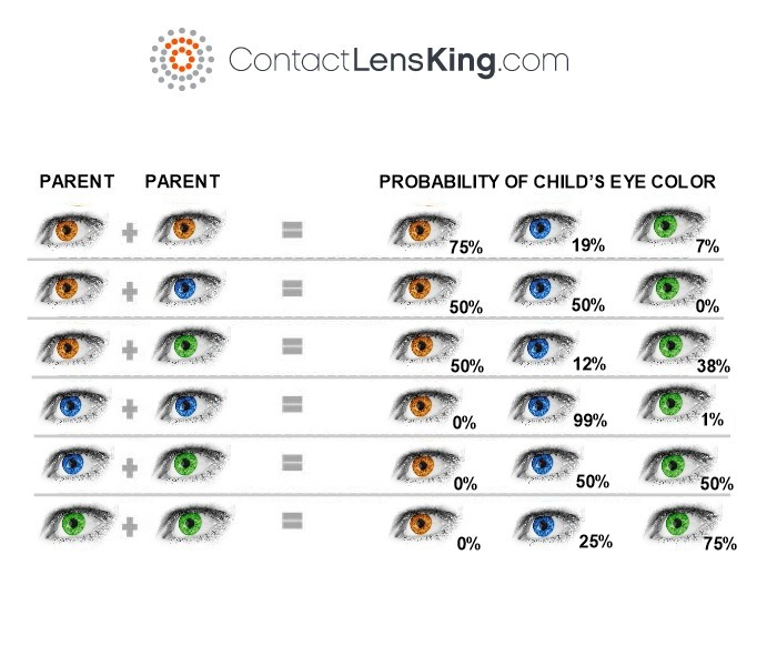Below is a chart that shows the inherited probabilities of eye color based  on dominant and recessive genes.