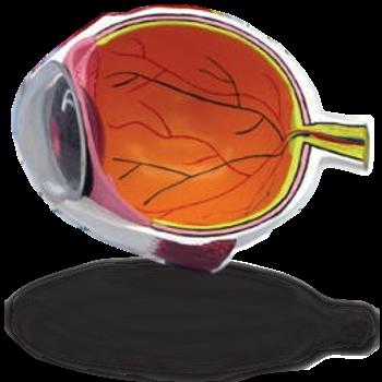 Eye Anatomy Basic Parts Of The Eye